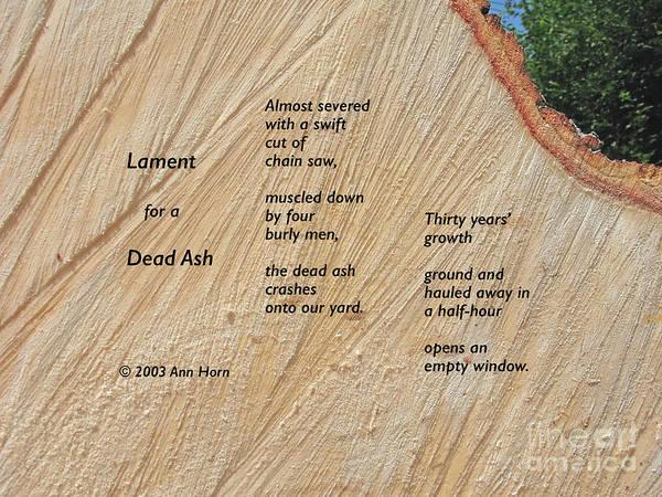 Photograph - Lament For A Dead Ash by Ann Horn