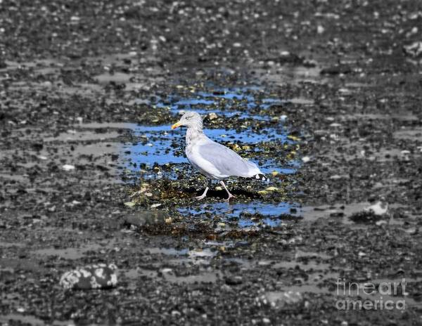 Photograph - Land Bridge Gull by Patti Whitten