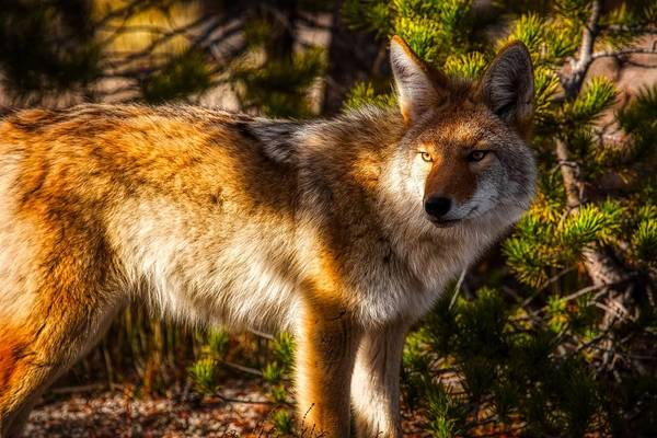 Wall Art - Photograph - Land Of The Coyote by N P S Neal Herbert
