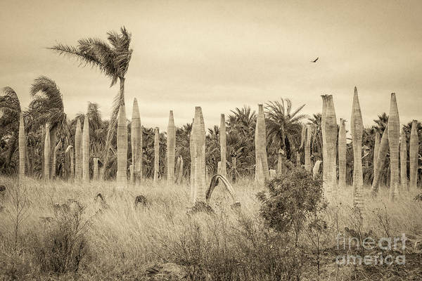 Wall Art - Photograph - Land Time Forgot by Imagery by Charly