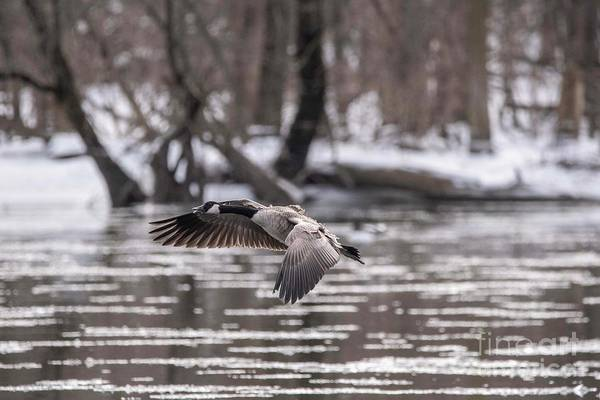Wall Art - Photograph - Landing On The River - 3 by David Bearden