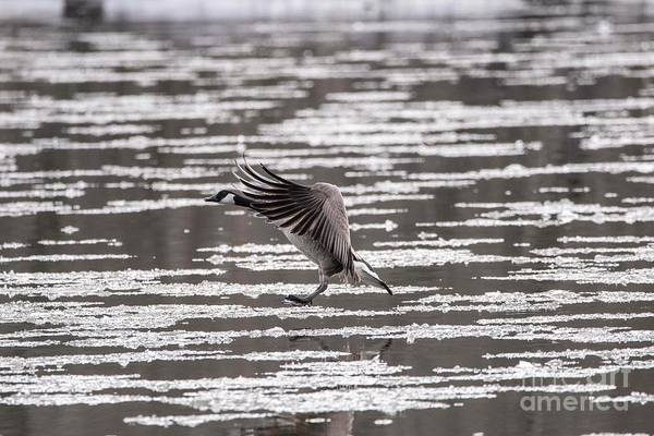 Wall Art - Photograph - Landing On The River - 4 by David Bearden