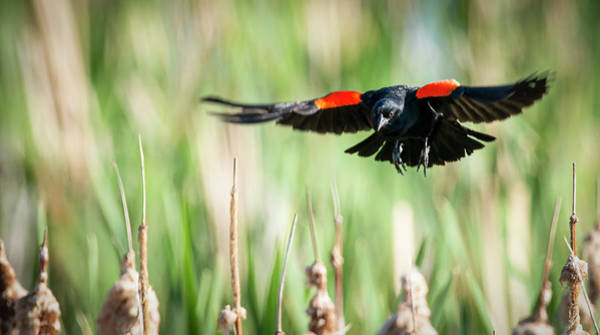 Photograph - Landing by Philip Rispin