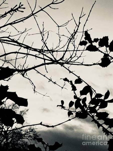 Photograph - Landscape Art Winter Holly Tree Monochrome by Itsonlythemoon