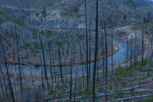 Wall Art - Photograph - Landscape Of Area After Forest Fire by Woods Wheatcroft