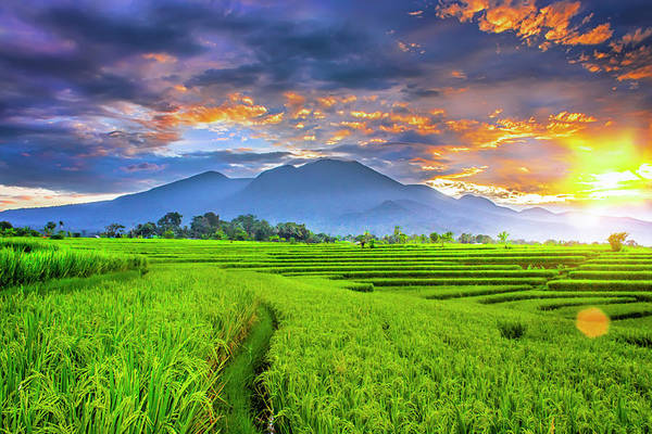 Bratan Photograph - Landscape Photography Beauty Morning With Sunrise At Paddy Fields On Mountain Range Indonesia by Rahmad Himawan