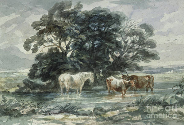 Wall Art - Painting - Landscape, Two Cows And A Horse Standing In Water by John Barker