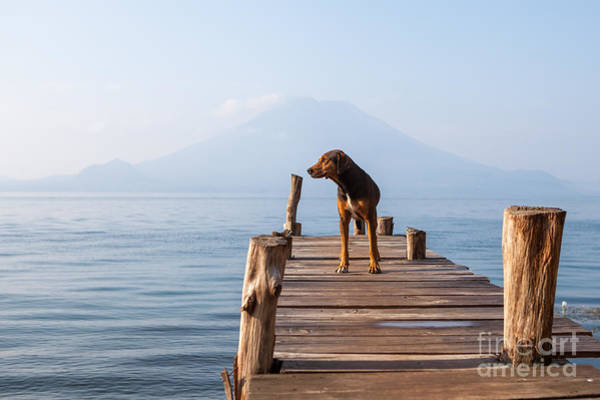 Wall Art - Photograph - Landscape With A Dog On A Pier By The by Tati Nova Photo Mexico