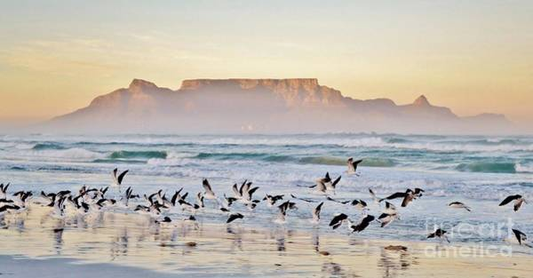 South Atlantic Wall Art - Photograph - Landscape With Beach And Table Mountain by Werner Lehmann