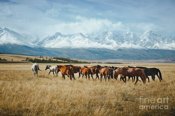 Wall Art - Photograph - Landscape With Wild Horses Near The by Mikhaylov Ilya