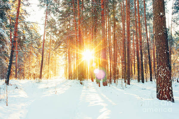 Pines Wall Art - Photograph - Landscape With Winter Forest And Bright by Grisha Bruev