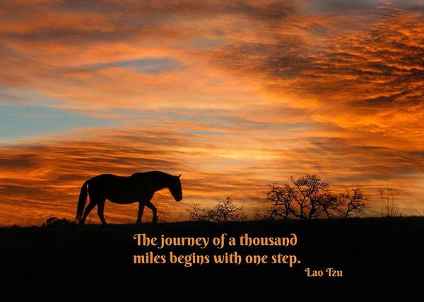 Wall Art - Photograph - Lao Tzu Famous Quote, The Journey Of A 1000 Miles Begins With One Step, Horse In Sunrise by Stephanie Laird
