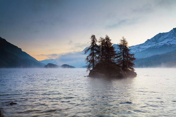 Bleached Photograph - Larch Trees On Island In Lake Sils by F. Lukasseck