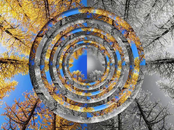 Wall Art - Photograph - Larches Color To Black And White Reflection Circles by Pelo Blanco Photo