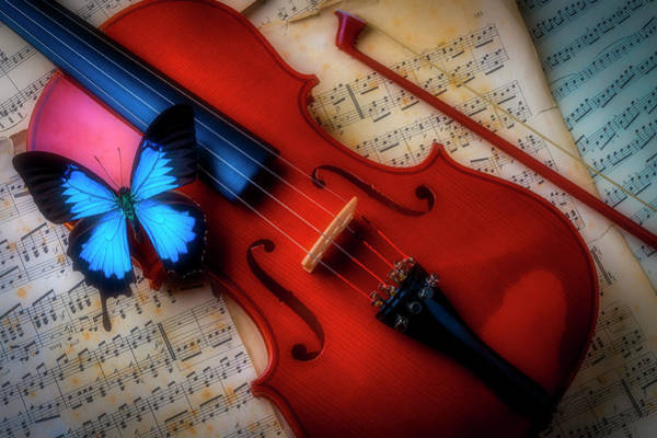 Photograph - Large Blue Butterfly On Violin by Garry Gay