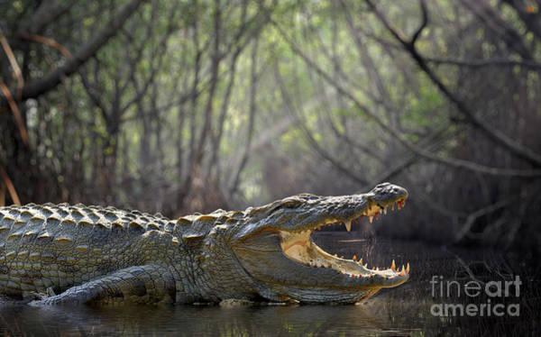 Wall Art - Photograph - Large Crocodile, National Park, Sri by Volodymyr Burdiak