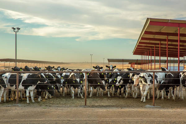 Photograph - Large Dairy Operation by Todd Klassy