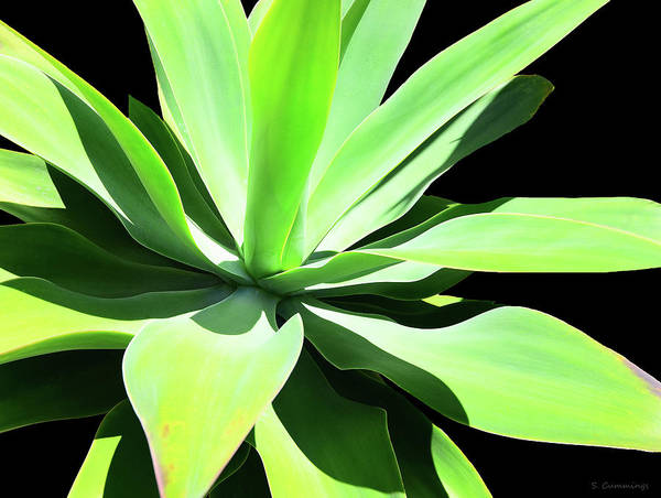 Agave Painting - Large Green Agave - Sharon Cummings by Sharon Cummings