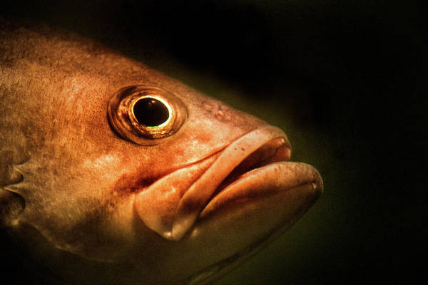 Photograph - Large Mouth Bass by Don Johnson