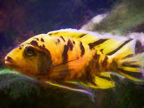 Digital Art - Large Ob Peacock Cichlid by Don Northup