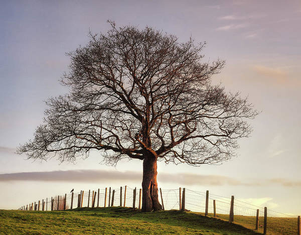 Protection Photograph - Large Tree by Jon Baxter