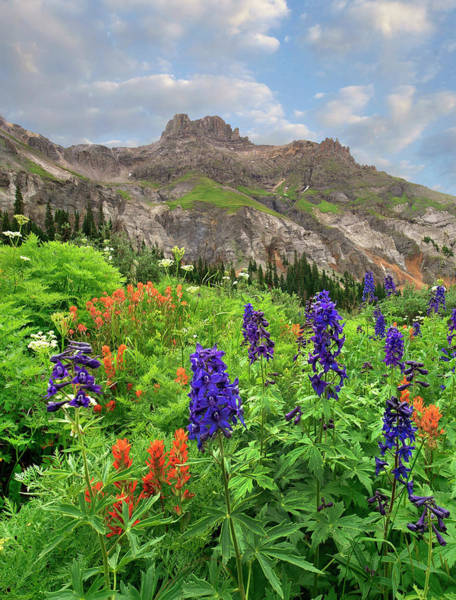 Wall Art - Photograph - Larkspur And Paintbrush, Yankee Boy by Tim Fitzharris