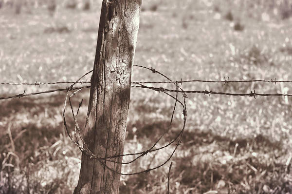 Photograph - Lassoed Barb Wire by JAMART Photography