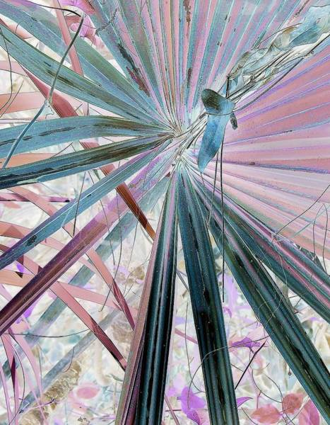 Palm Frond Digital Art - Lassoed Leaf by John Hintz