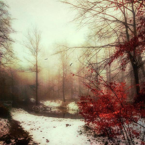 Photograph - Last Copper- Misty Winter Day by Dirk Wuestenhagen