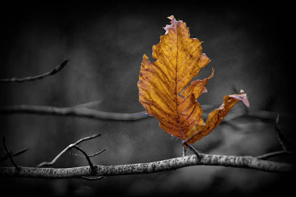 Photograph - Last Leaf Of Autumn In Selective Color by Randall Nyhof