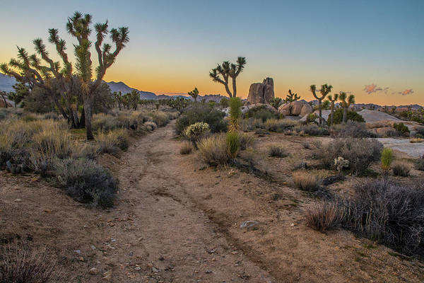 Photograph - Last Light At Joshua Tree by Matthew Irvin