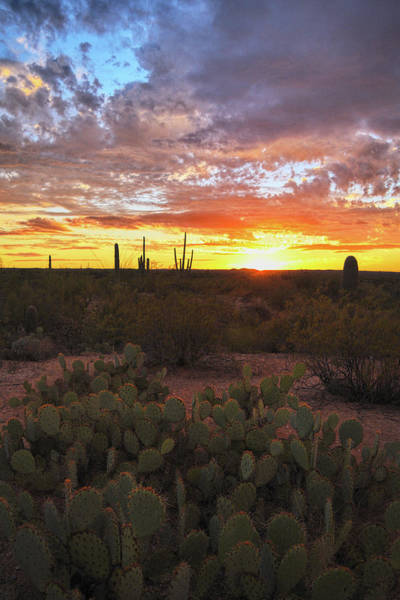 Photograph - Last Light Dabs The Prickly Pear Against Arizona Sky by Chance Kafka