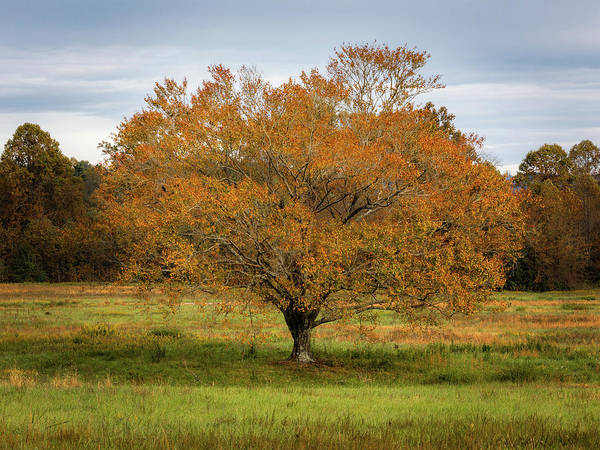 Photograph - Ecusta Tree by Donnie Whitaker