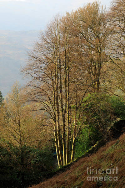 Wall Art - Photograph - Late Afternoon Sun On Bare Trees In Autumn Near Grasmere by Louise Heusinkveld
