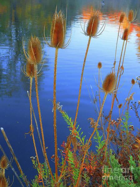Wall Art - Photograph - Late Autumn Afternoon Travel Idaho Photography by Art Sandi