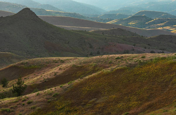 Photograph - Late Evening View Of The Painted Hills by Matthew Irvin