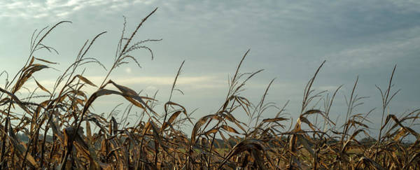 Wall Art - Photograph - Late Season Corn Stalks Panorama by Steve Gadomski