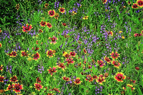 Photograph - Late Spring Bloomers In The Hill Country by Lynn Bauer