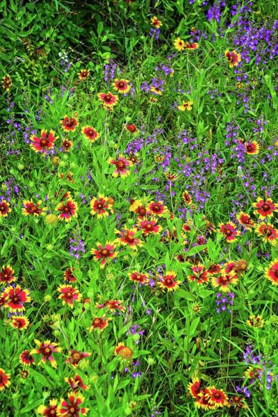 Photograph - Late Spring Bloomers In The Hill Country - Vertical by Lynn Bauer
