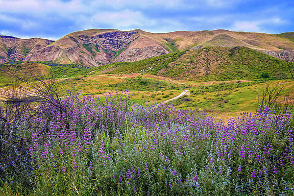 Photograph - Late Spring In Simi Valley - Superbloom 2019 by Lynn Bauer
