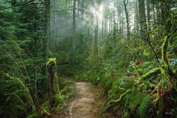 Photograph - Latourell Trail by Chris Steele