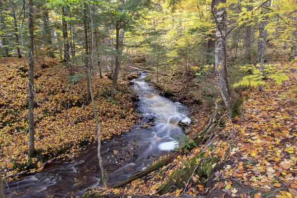 Photograph - Laughing Whitefish Creek 10121801 by Rick Veldman