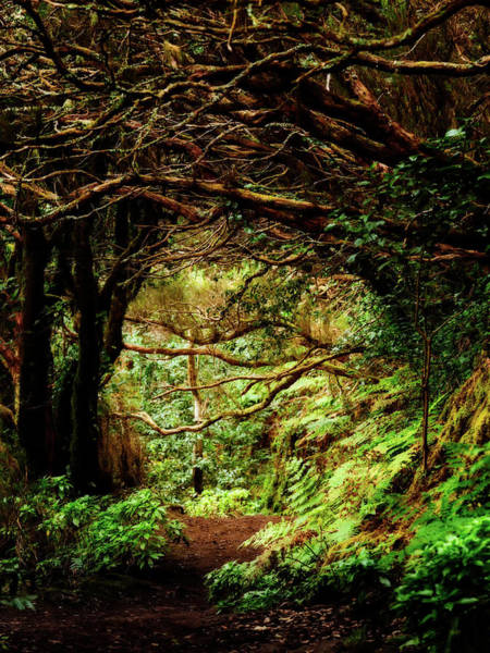 Photograph - Laurel Forest On Anaga Mountains - Tenerife, Spain by Nico Trinkhaus
