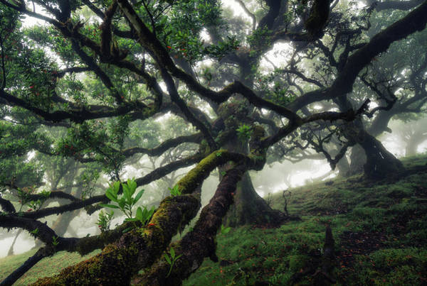 Wall Art - Photograph - Laurel Tree On Madeira by Martin Podt