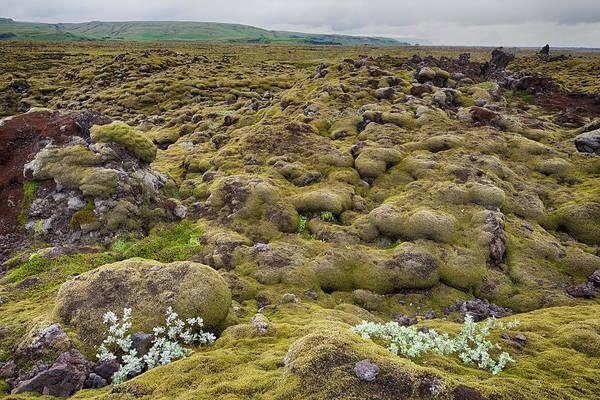 Photograph - Lava Field Iceland 6281901 by Rick Veldman
