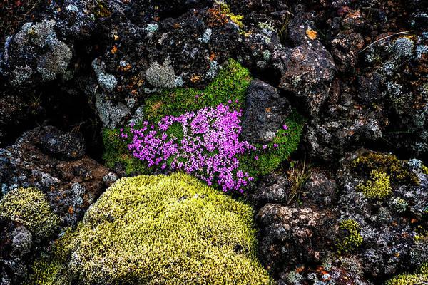 Photograph - Lava Rocks And Flowers by Tom Singleton
