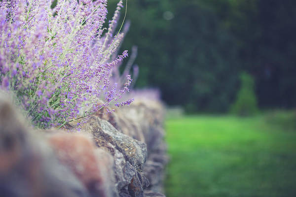 Wall Art - Photograph - Lavender And Stone by Shane Holsclaw
