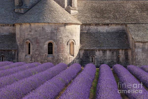 Photograph - Lavender At Abbaye De Senanque by Brian Jannsen