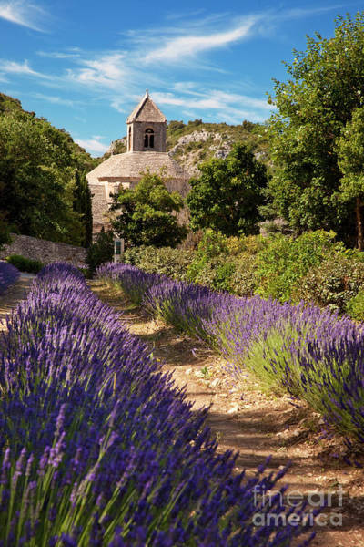 Photograph - Lavender At Senanque by Brian Jannsen