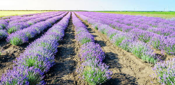 Wall Art - Photograph - Lavender Field by Alexey Stiop
